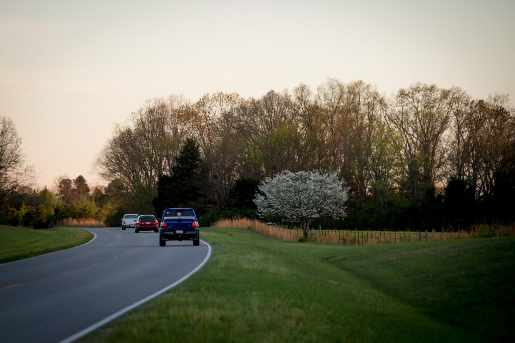 Dogwoods along the Natchez Trace Parkway