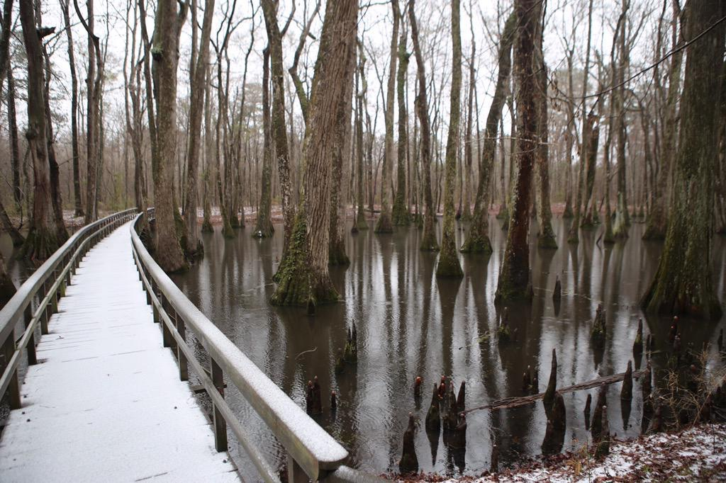 Cypress Swamp on the Natchez Trace Parkway, Milepost 122.0