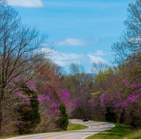 Redbud trees along the Natchez Trace Parkway