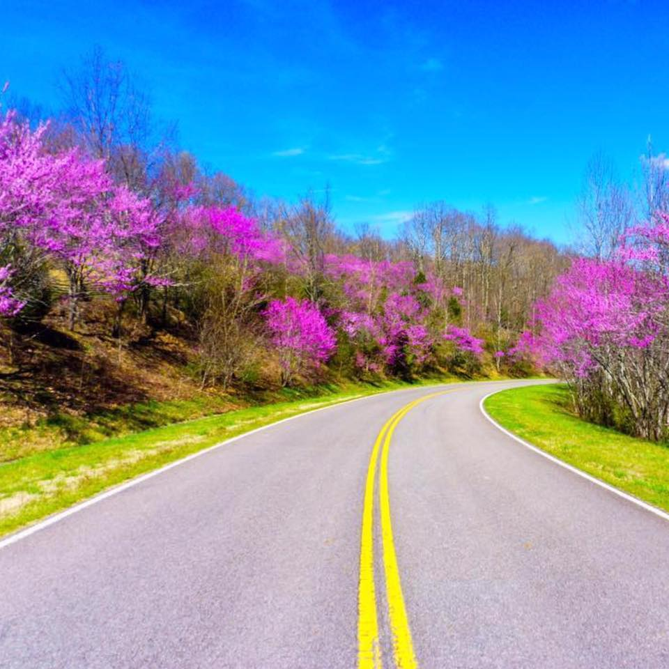 Redbuds on the Natchez Trace Parkway
